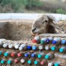Love that fence .... gives the sheep almost an artistic flair